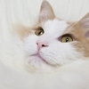 猫の落下事故☆11月の平和な20日間の日々の様子について