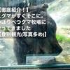 【徹底紹介!】ヒグマがすぐそこに。のぼりべつクマ牧場に行ってきました【登別観光(写真多め)】