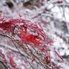 雪降る弘前散歩