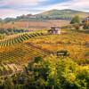 イタリアワイン 食用ブドウとワイン用ぶどうの違い ご存知ですか? (16-2)