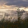 渚のサーフ物語「『惜しむ』とは『愛すべきもの』かな。梅雨の晴れ間のサンセットクルージングが教える夕暮れ時の愛おしさ」の巻。