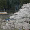 奥多摩の桜を撮る!(その3)