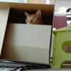 斜陽産業の猫間商事チャシマン支社