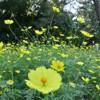 昭和記念公園、初秋の花!
