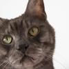 猫カフェで一眼レフカメラ練習! ズームレンズでの焦点距離の選び方!