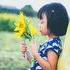 """これが""""盛夏の成果""""ナノだ→「巨大向日葵」咲かせたよっ! 【植物栽培】"""