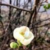 冬に咲く花たち