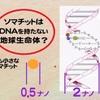 転載記事:ガン治療器(AWG電子照射機)が効果を上げた謎→遺伝子を持たない生命体がミトコンドリアに電子を供給する仕組み。