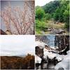 テンカラのシーズンについて:各月ごとの渓流釣りのフィールド状況とコツまとめ