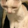 ヨーダ似の猫さん