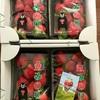 【熊本県玉名市】清元ファームの、恋みのり。果肉しゃっきり大粒の苺!【ふるさと納税】