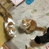 うちの猫たち