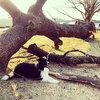 綺麗さっぱりミシェル坊と広々、西都原公園で戯れる(宮崎県西都市)