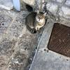 2017ギリシャ旅行【12】〜エーゲ海クルーズ・猫の楽園、イドラ島〜