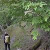 森で休むこと 流れる風景