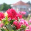 赤城自然園と敷島公園バラ園