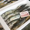 2017年7月14日 小浜漁港 お魚情報