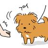 【犬写真】ジャパンペットフェアに行ってきました。