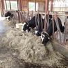 牛の体調が悪くなりました:卒論実験を通しての成長