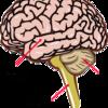 【論文考察】『運動学習にかかわる小脳の働き』から学ぶ練習への取り組み方 ~フィードバック情報を中心に~