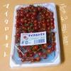 小さくてかわいいマイクロトマトを食べるよ【愛知県産】