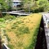 はじめての自然農のお米作り:挑戦