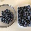 ブルーベリー収穫とカラス対策