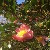 椿と薔薇園