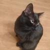 猫は完璧なシルエットを持っている!