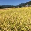 お米を作りに群馬県東吾妻町に行ってみた。稲刈り編。(群馬県東吾妻町)