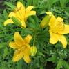 水無月の庭の花