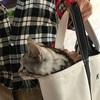 ジル(猫)のお散歩にはトートバッグがピッタリ!いっぱいお散歩楽しんだよ♪