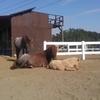 馬とポケモンGO!