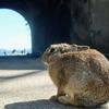 ウサギの島、毒ガスの島『大久野島』に行って来たよ!