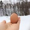 縁起物!『大寒卵』🥚