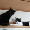 猫の飼い方、部屋は何部屋必要なの?