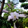 わが家の山野草ミニ盆栽