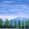 富山県総合運動公園の新緑
