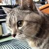 推定22年の天寿を全うしてウチの老猫は静かに逝った