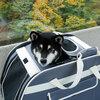 札幌国際スキー場でドッグランと秋祭りと紅葉ゴンドラ【2019年10月6日】