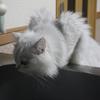 ドラマブログを運営している晃の自己紹介!