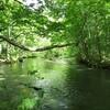 奥入瀬渓流  やはり癒し