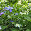 植物園を楽しむ