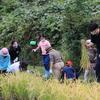 瀬谷小稲刈り体験