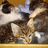 野良猫たちの避妊・去勢手術を広めたい ~無責任な餌やりには疑問です~
