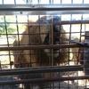 アフリカンサファリ・ジャングルバスに行った感想・レビュー