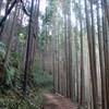 愛宕山のハイキング(その2)清滝~月輪寺参道登山口
