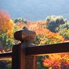 会いたいね。そうだ京都、行っちゃう?
