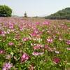 五月晴れの瀧谷不動尊。周辺の田んぼではレンゲ草が満開です。