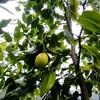ep.93  果実の実を見つける